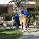 pet-friendly-accommodation-spain