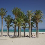 24 Palm trees on the beach-Costa-Benidorm