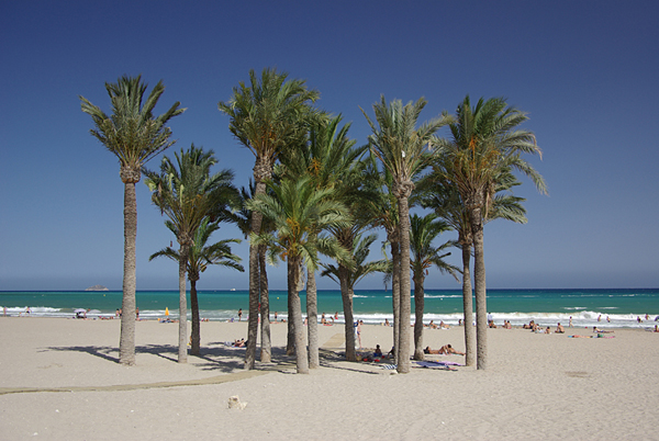 24 Palm trees on the beach