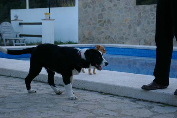 Pet-Friendly-Spain-10