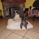 Pet Friendly Accommodation Spain