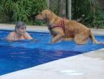 Pet Friendly Accommodation Costa Blanca